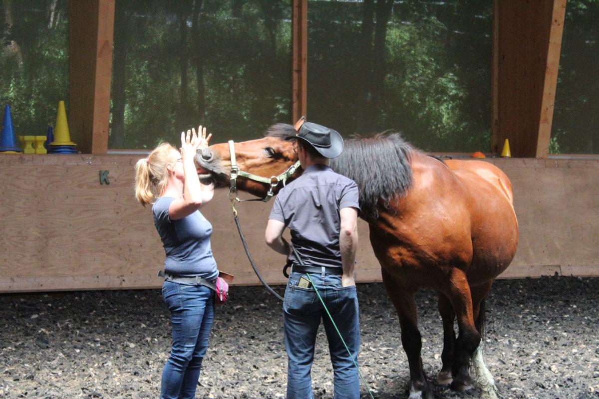 pferbindungswege_anne_preiss_weil-uns-pferde-so-viel-lehren_12