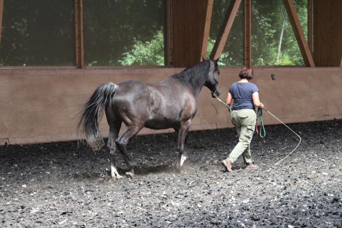 pferbindungswege_anne_preiss_weil-uns-pferde-so-viel-lehren_13