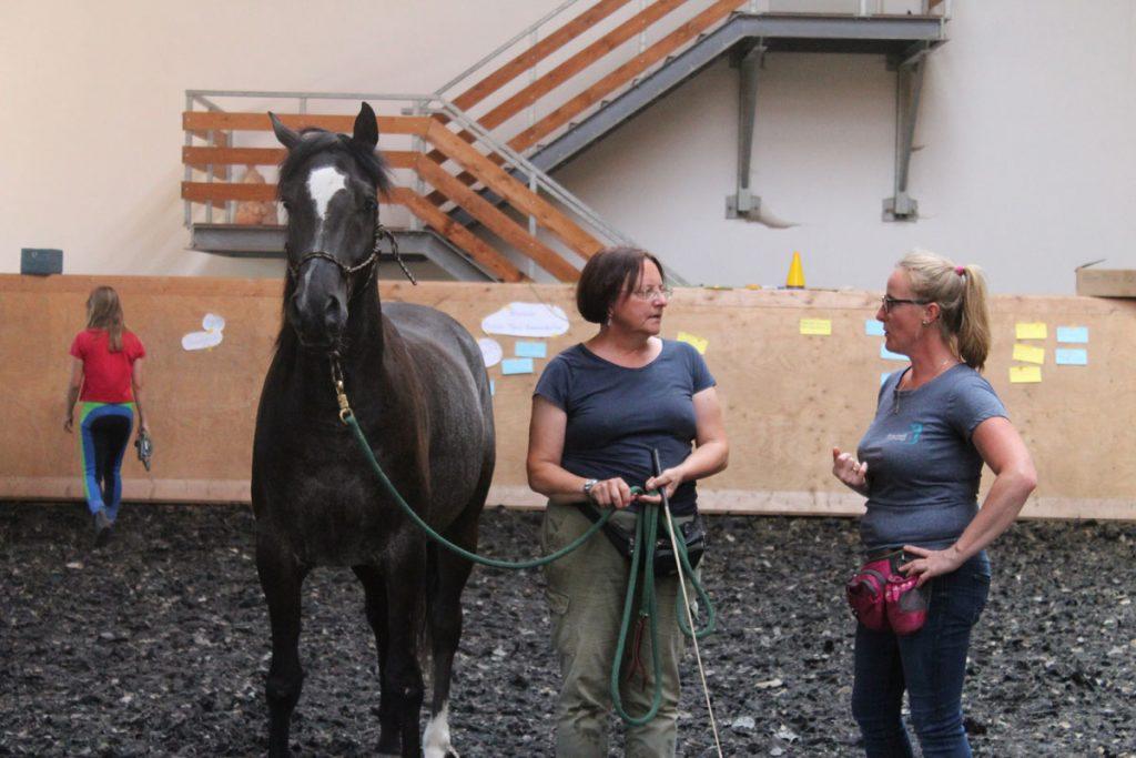 pferbindungswege_anne_preiss_weil-uns-pferde-so-viel-lehren_15