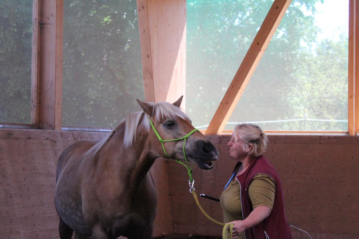 pferbindungswege_anne_preiss_weil-uns-pferde-so-viel-lehren_17