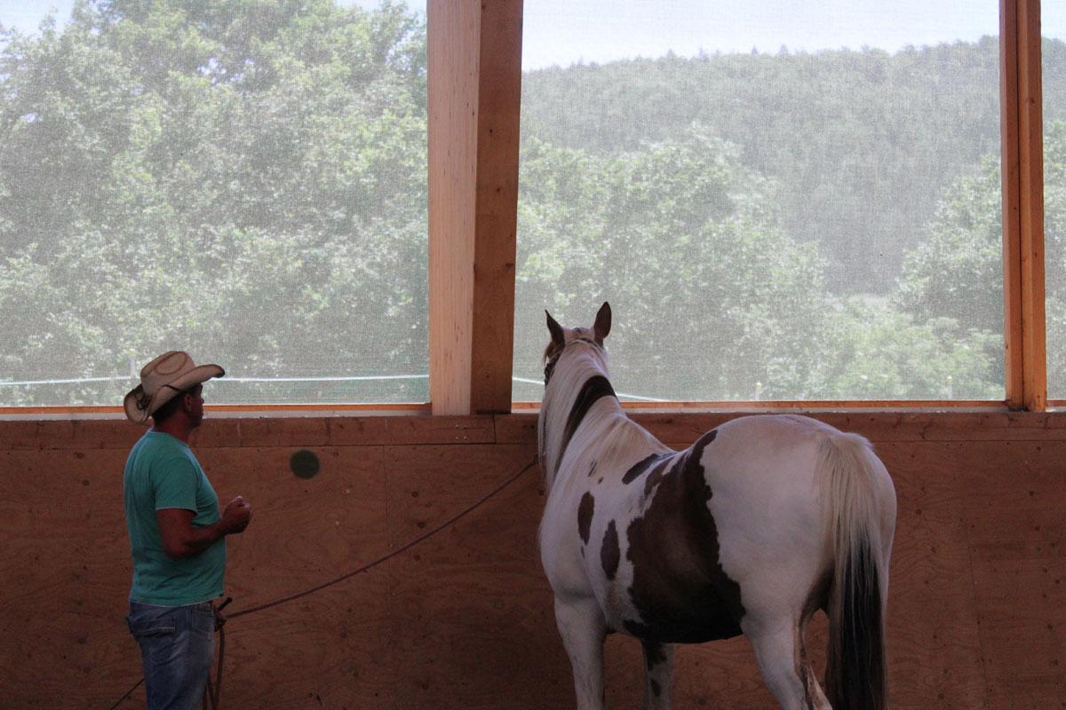pferbindungswege_anne_preiss_weil-uns-pferde-so-viel-lehren_18
