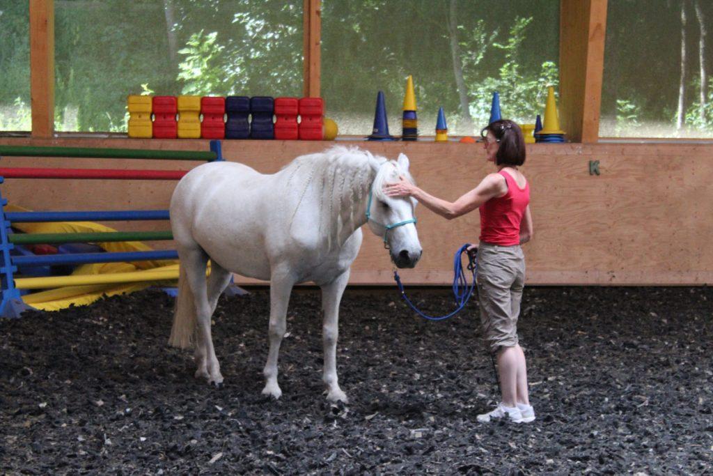 pferbindungswege_anne_preiss_weil-uns-pferde-so-viel-lehren_20